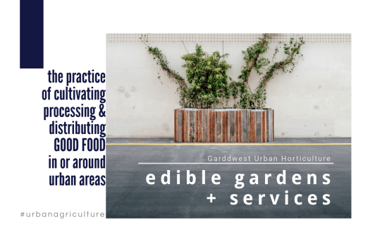 Garddwest Urban Food Gardens (1)