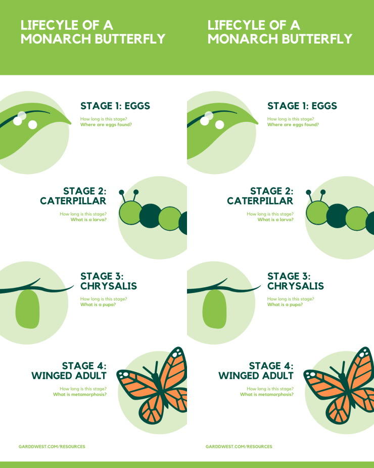 garddwest printable lifecycle of monarch double
