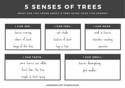 April 8 - SPROUTS - 5 Senses of Trees Handout Back - Garddwest EcoEducation
