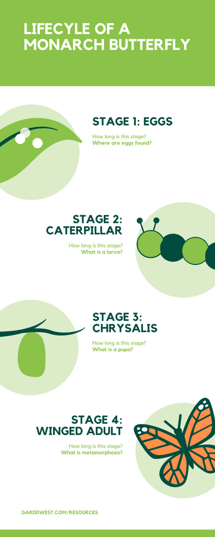 Lifecycle of a Butterfly Infographic GARDDWEST